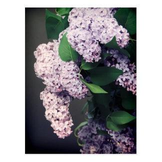 Ramo de la lila con la ilustración tarjeta postal