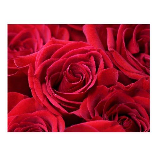 Ramo de los rosas rojos tarjetas postales