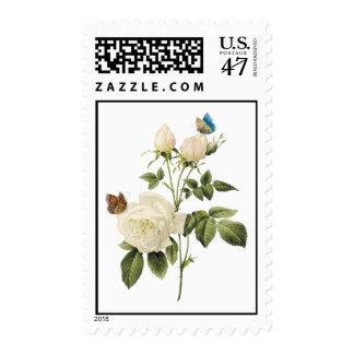 Ramo de rosas blancos con franqueo de las sello postal