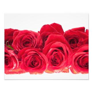 Ramo de rosas rosados brillantes cojinete