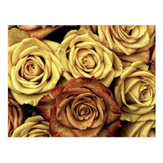 Ramo floral descolorado hermoso del vintage de los tarjetas postales