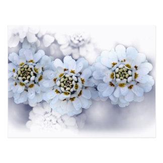 Ramo hermoso de la flor blanca tarjetas postales