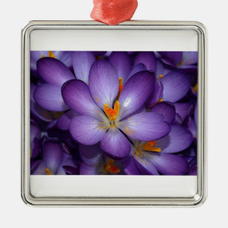 Ramo púrpura del azafrán adorno cuadrado plateado