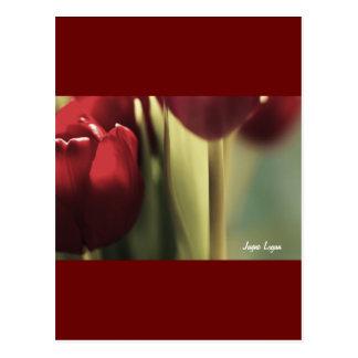 Ramo rojo, tulipanes, artography floral, tarjetas postales