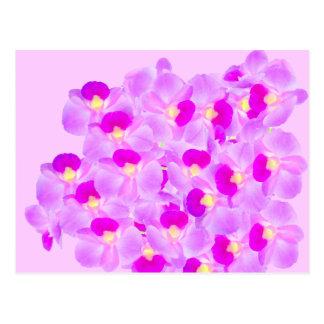 Ramo rosado de la orquídea postal