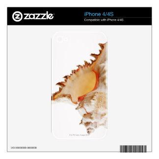 Ramose Murex (Chicoreus ramosus) shell against Skin For iPhone 4