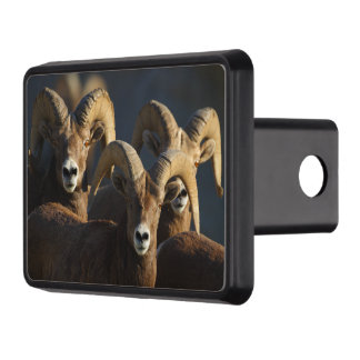rams hitch cover