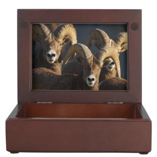 rams keepsake boxes