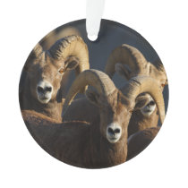 rams ornament