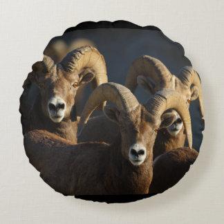 rams round pillow