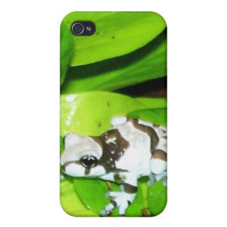 Rana 2 de la leche del Amazonas iPhone 4 Fundas