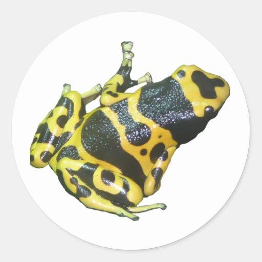 Rana amarilla de la flecha del dardo del veneno pegatinas redondas