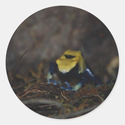 Rana amarilla del dardo del veneno pegatina redonda