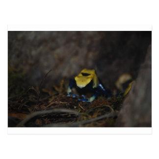 Rana amarilla del dardo del veneno postal