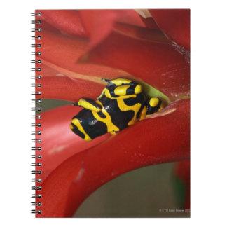 rana Amarillo-congregada del veneno Libro De Apuntes Con Espiral