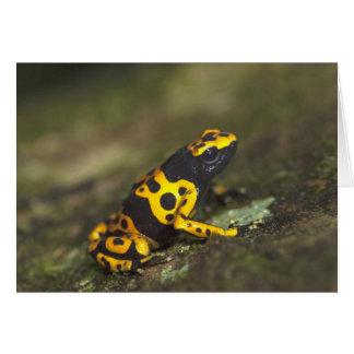 rana Amarillo-congregada Dendrobates del dardo del Tarjeta De Felicitación