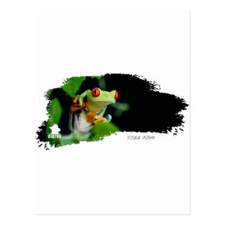 Rana arbórea 01 tarjetas postales