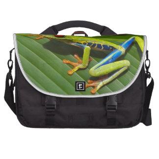 Rana arbórea bolsas de portatil