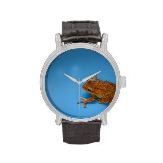Rana arbórea contra fondo azul en la derecha relojes de pulsera