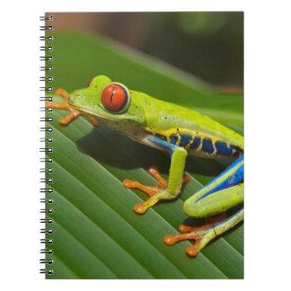 Rana arbórea cuadernos