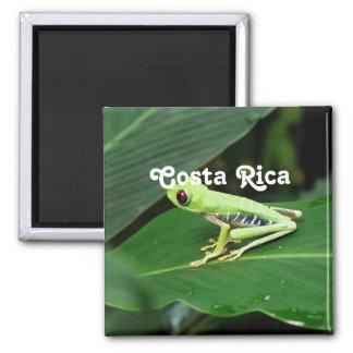 Rana arbórea de Costa Rica Imán Cuadrado