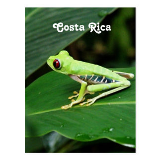 Rana arbórea de Costa Rica Postal