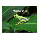Rana arbórea de Costa Rica Tarjetas Postales