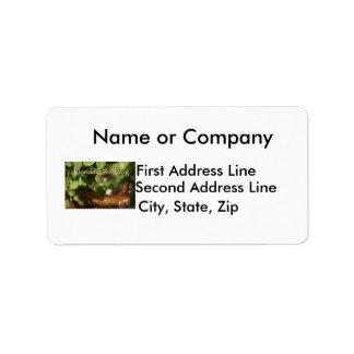 Rana arbórea del bebé en planta de los bonsais con etiqueta de dirección