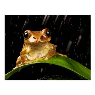 Rana arbórea del oro en la imagen de la lluvia tarjeta postal