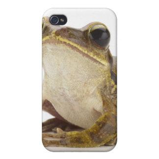 Rana arbórea del oro iPhone 4 carcasa