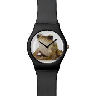 Rana arbórea del oro relojes de pulsera
