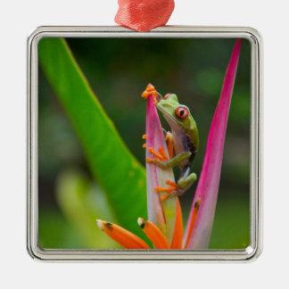 rana arbórea del Rojo-ojo, Costa Rica 2 Adorno Navideño Cuadrado De Metal