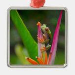 rana arbórea del Rojo-ojo, Costa Rica 2 Ornamento Para Arbol De Navidad