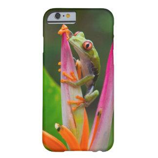 rana arbórea del Rojo-ojo, Costa Rica 2 Funda De iPhone 6 Barely There