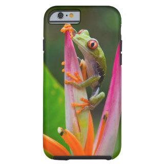 rana arbórea del Rojo-ojo, Costa Rica 2 Funda De iPhone 6 Tough