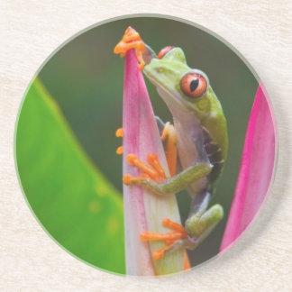 rana arbórea del Rojo-ojo, Costa Rica 2 Posavasos Diseño
