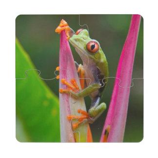 rana arbórea del Rojo-ojo, Costa Rica 2 Posavasos De Puzzle