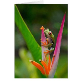 rana arbórea del Rojo-ojo, Costa Rica 2 Tarjeta De Felicitación