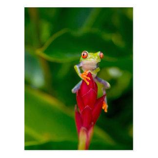 rana arbórea del Rojo-ojo, Costa Rica Tarjeta Postal