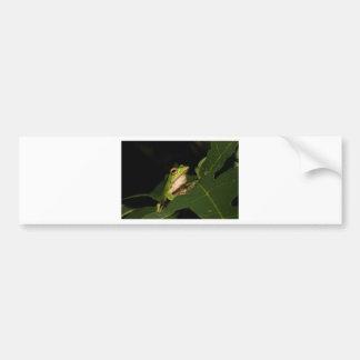 Rana arbórea esmeralda del ojo pegatina para auto