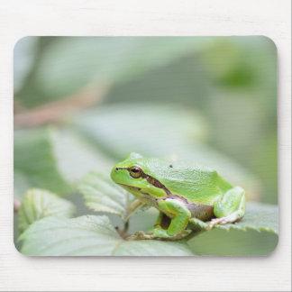 Rana arbórea europea en verde tapete de raton