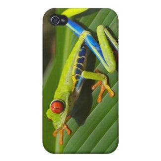 Rana arbórea iPhone 4/4S carcasa
