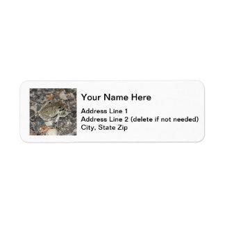 Rana arbórea gris etiquetas de remite