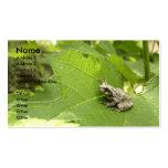 Rana arbórea gris plantilla de tarjeta de visita