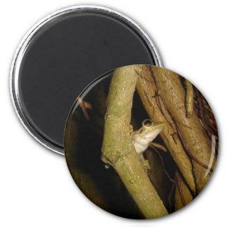 Rana arbórea imán de frigorífico