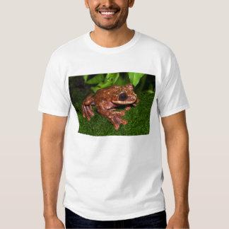 Rana arbórea Limbed de la franja de Ecnomiohyla Camisas