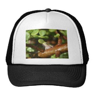 Rana arbórea lista para saltar de árbol de los bon gorras de camionero