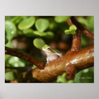 Rana arbórea lista para saltar de árbol de los bon impresiones