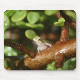 Rana arbórea lista para saltar de árbol de los bon tapetes de ratón