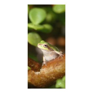 Rana arbórea lista para saltar de árbol de los bon tarjeta publicitaria a todo color